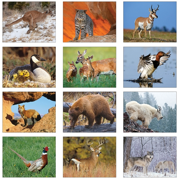 Art of Wildlife Executive Calendars, Custom Printed With Your Logo!