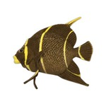 Custom Imprinted Fish Themed Promotional Items