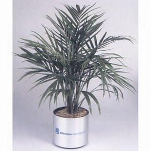 Custom Imprinted Large Live Luau Plants